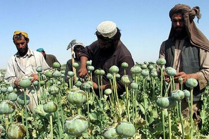 Afghan farmers in their fields.